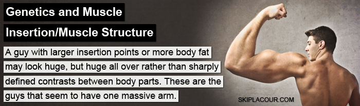 Genetics and Muscle The TRUTH About Bringing Up Lagging Body Parts